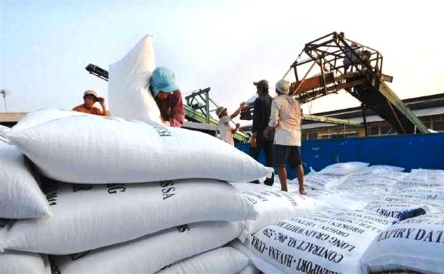 Châu Phi tăng nhập khẩu gạo từ Việt Nam