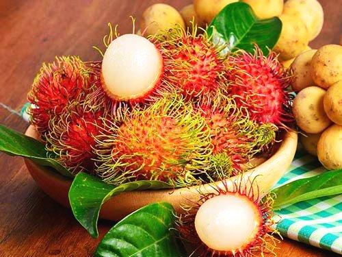 Công ty XNK trái cây Chánh Thu – Nâng tầm thương hiệu trái cây VN