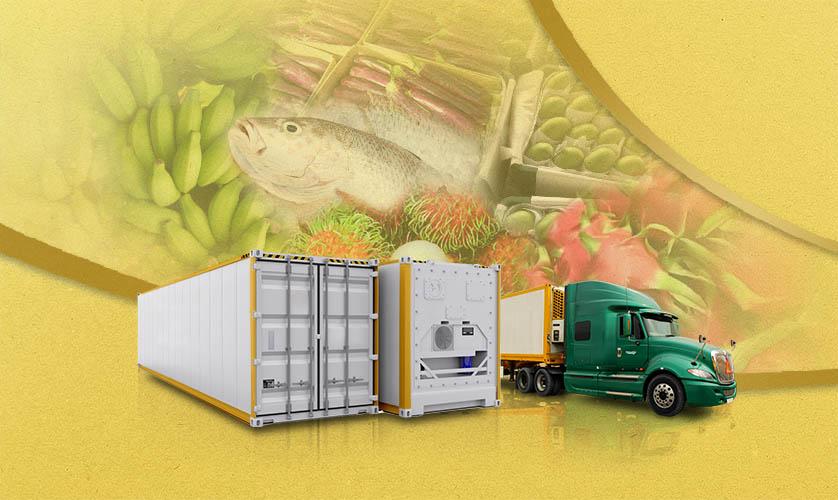 Chuỗi cung ứng lạnh – Tân Nam Chinh