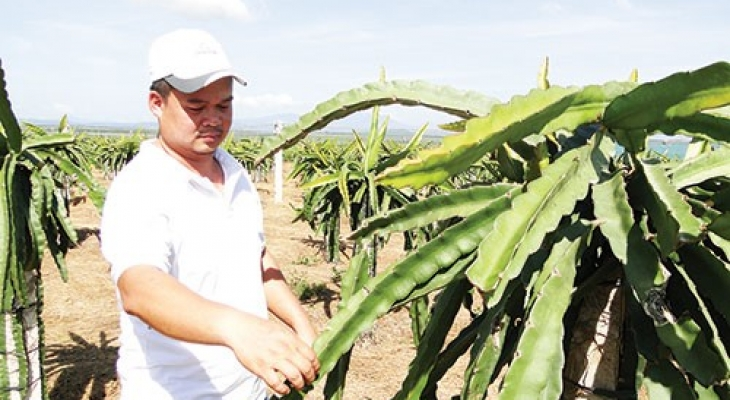 Trang trại thanh long, dưa lưới 40 tỷ của nông dân 8X